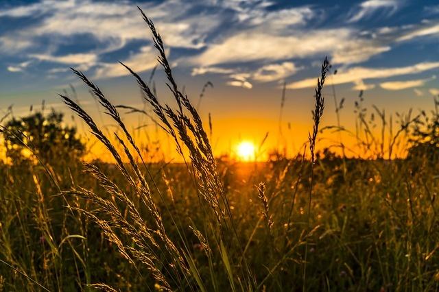 ВТверской области полным ходом идет заготовка кормов
