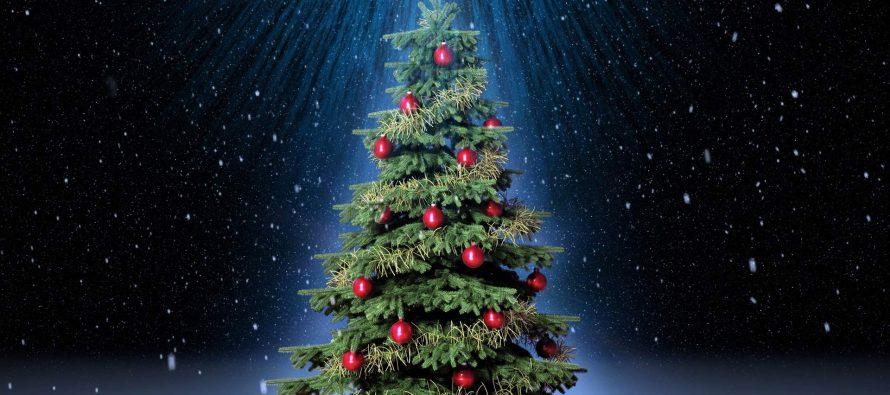 Роспотребнадзор дал поезные советы по выбору елки на Новый год