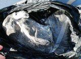 В Рязани нашли пакет с останками рядом с мусорными баками