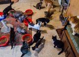 Жители Рязани призвали неравнодушных помочь женщине с большим количеством кошек