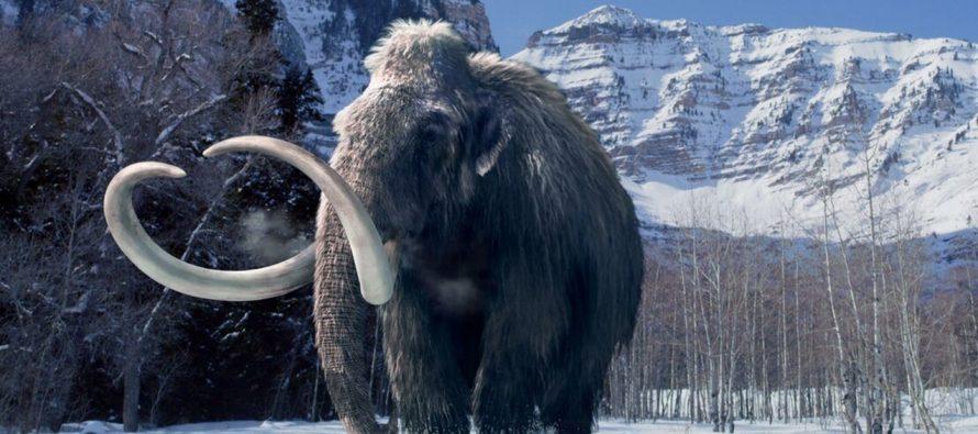 Ученым удалось получить древнюю ДНК мамонта, которой более 1 млн. лет