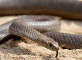 Ученые из Германии обнаружили в Мьянме новый вид змей