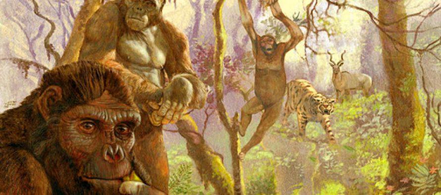 Древние предки Homo sapiens имели повадки современного шимпанзе