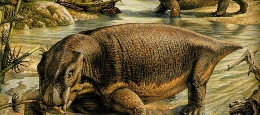 Китайские ученые обнаружили останки самой древней рептилии с бивнями
