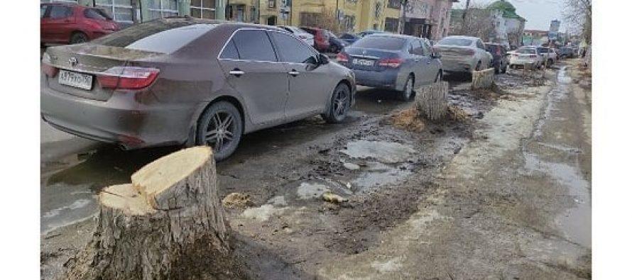 «Северная компания» прокомментировала вырубку деревьев на улице Радищева в Рязани