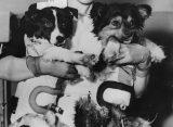 Роскосмос обнародовал документы ополете двух собак на орбиту Земли