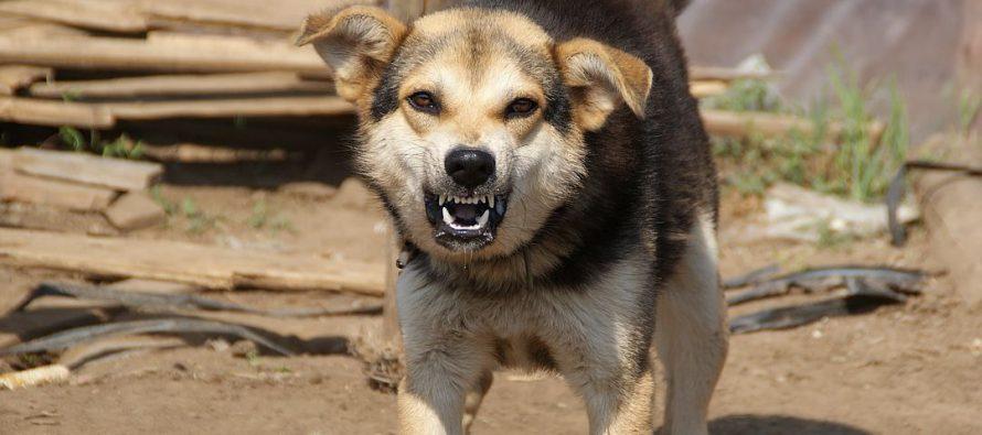 В Рязани на ул. Белякова на ребенка напала агрессивная собака