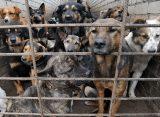 Рязанская администрация заключила контракт на отлов бездомных животных