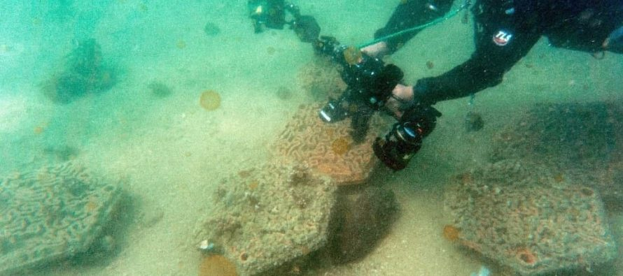 Хрупкие коралловые рифы Гонконга укрепились за счет 3D-печати