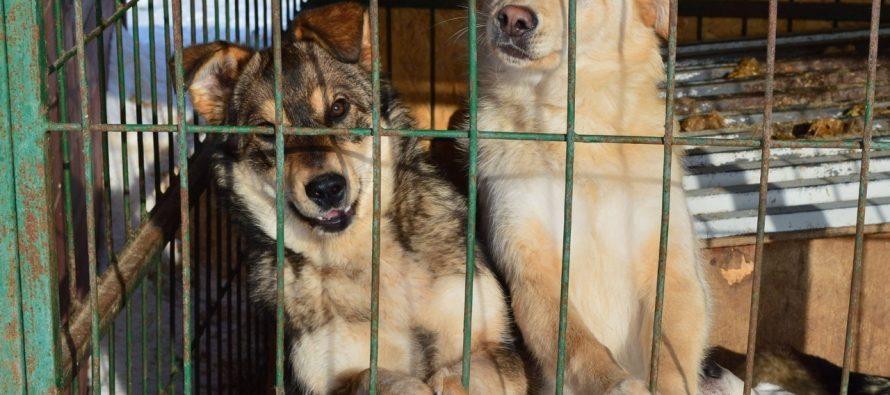 Администрация Рязани выделит 14 миллионов рублей на бездомных животных