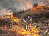 Рязанская администрация опровергла информацию о пожаре в жилище многодетной семьи