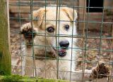 Приют для бездомных животных будут строить в рязанском поселке Храпово
