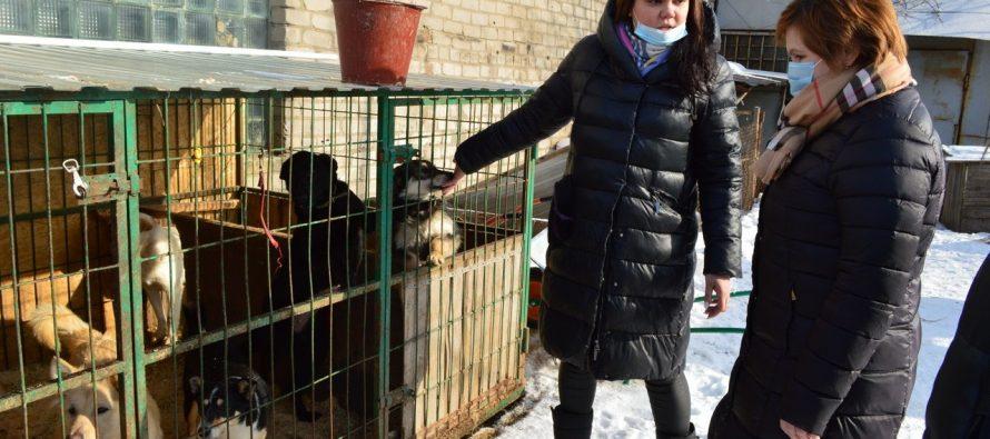 Депутат Денис Сидоров потребовал провести расследование происшествия в приюте для бездомных животных