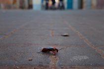 В рязанской ОДКБ засняли на видео червей и тараканов