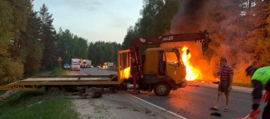 Водитель «Мазды», сбивший лося в Рязанской области, попал в больницу
