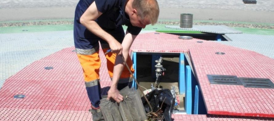 В Рязани почистили от мусора и пыли фонтан на Московском шоссе
