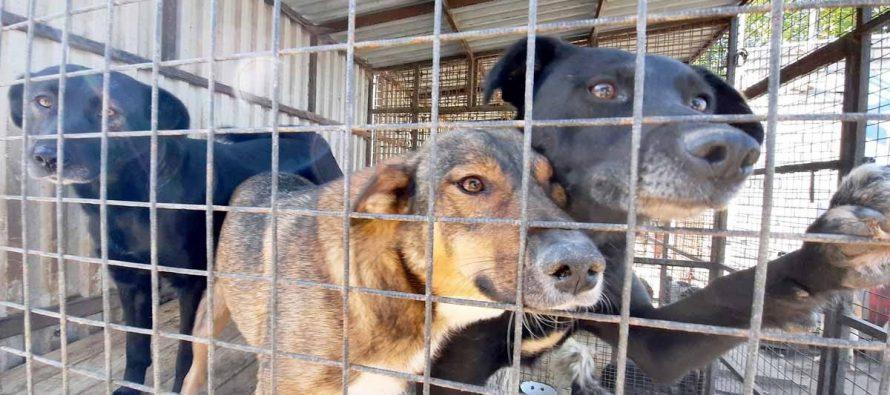 В Новомичуринске отловили 9 бродячих собак после нападения животных на ребенка в парке