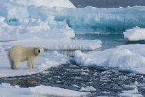 В МИД рассказали, почему Россия наращивает военное присутствие в Арктике