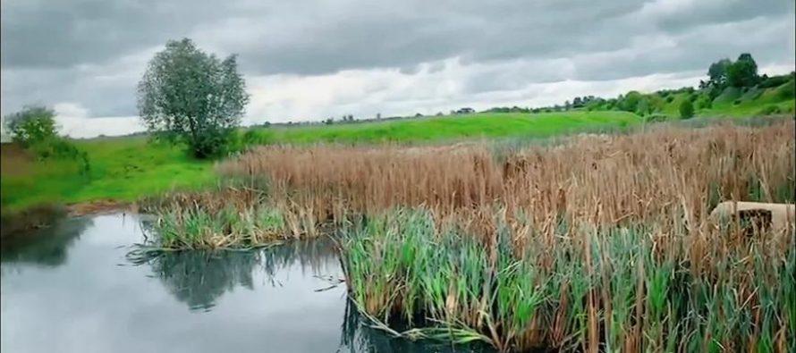 Минприроды Рязани подтвердило загрязнение реки Быстрица опасными веществами