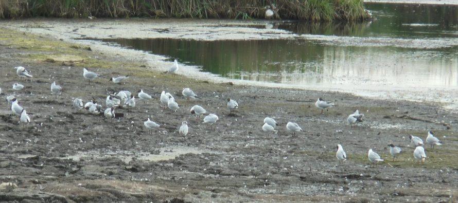 Соцсети: В Рязани снова засыпают озеро «Дикая утка»