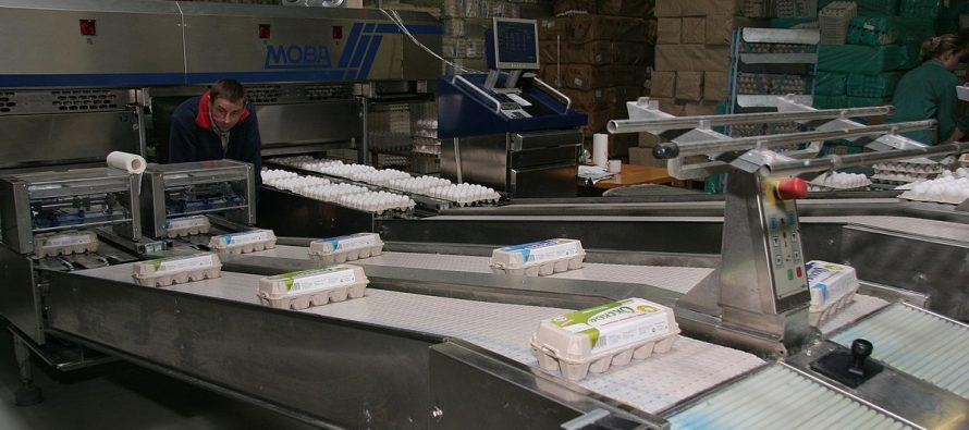 Рязанское УФАС сочло обоснованным повышение цен на яйца и мясо кур