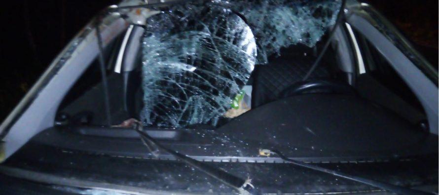 Девушка-водитель пострадала после столкновения с лосем на дороге в Рязанской области
