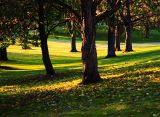 В поселке Приокский в Рязани создадут новый парк