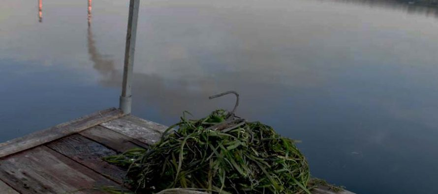 В Новомичуринске дачники обнаружили на дне водохранилища человеческий череп