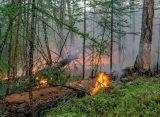 Под Рязанью зафиксировали 4 новых случая умышленного поджога леса
