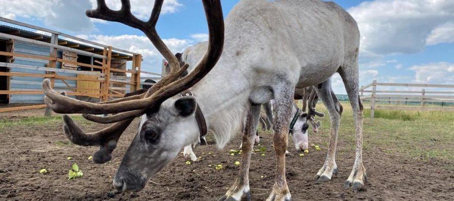 Прокуратура обнаружила нарушения правил содержания животных в трех рязанских комплексах