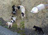 Мэрия Рязани прокомментировала жалобы жителей Канищево на агрессивную стаю собак