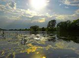 На расчистку реки Солотча в Рязани выделили более 115 миллионов рублей