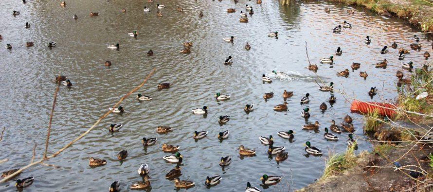 В Рязани завершены работы по очистке пруда «Серая шейка»