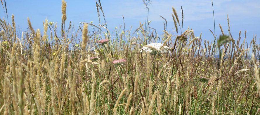 В Рязанской области оштрафовали на 550 тысяч рублей крупное сельхозпредприятие
